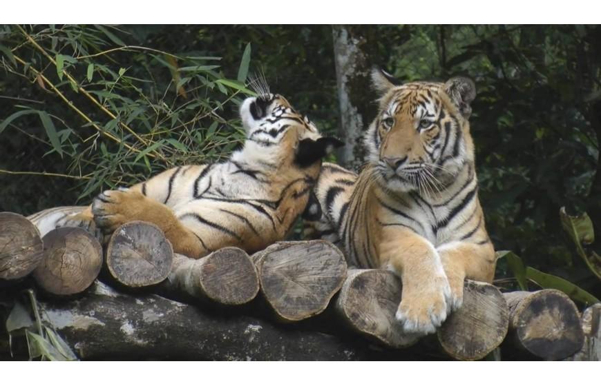 حديقة الحيوانات - معلومات ماليزيا - سياحة ماليزيا - اماكن سياحية في ماليزيا