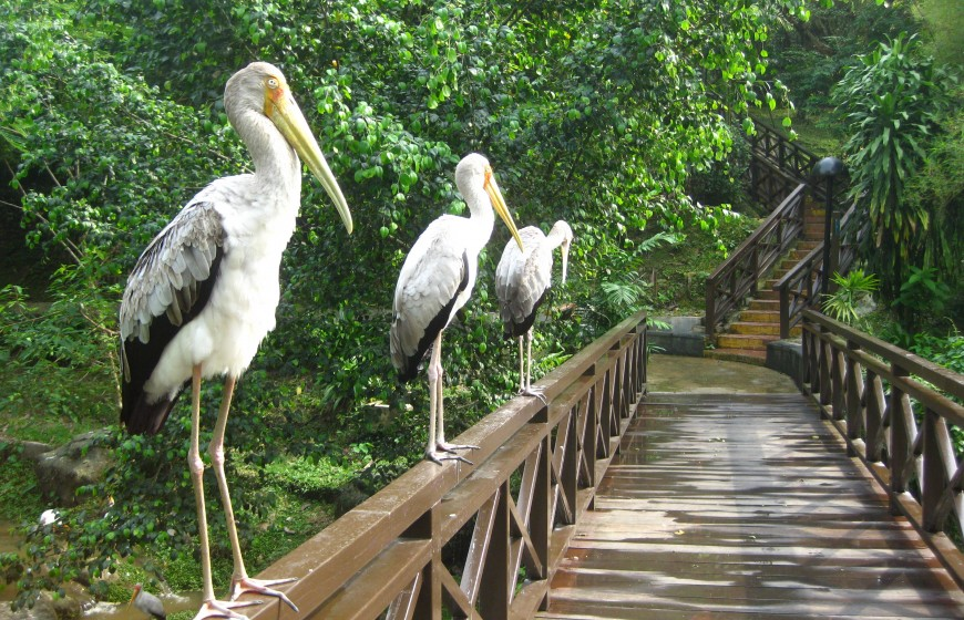 حديقة الطيور - معلومات ماليزيا - سياحة ماليزيا - اماكن سياحية في ماليزيا