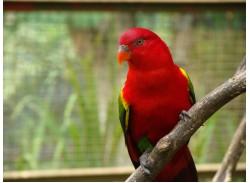 حديقة الطيور -ماليزيا