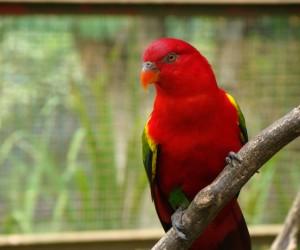 حديقة الطيور في كولالمبور ماليزيا