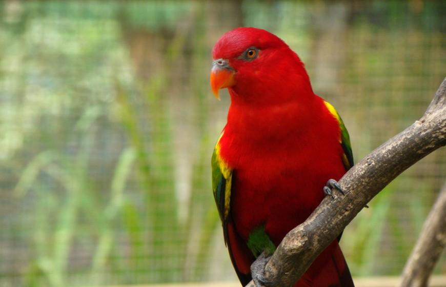 حديقة الطيور في كولالمبور ماليزيا - معلومات ماليزيا - سياحة ماليزيا - اماكن سياحية في ماليزيا