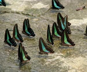 حديقة الفراشات في مدينة كولالمبور ماليزيا