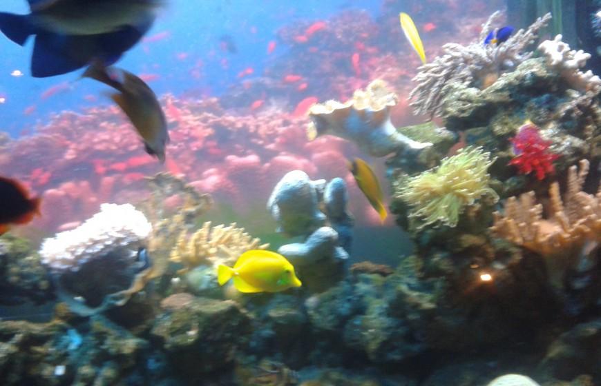 أكواريا عالم البحار - معلومات ماليزيا - سياحة ماليزيا - اماكن سياحية في ماليزيا