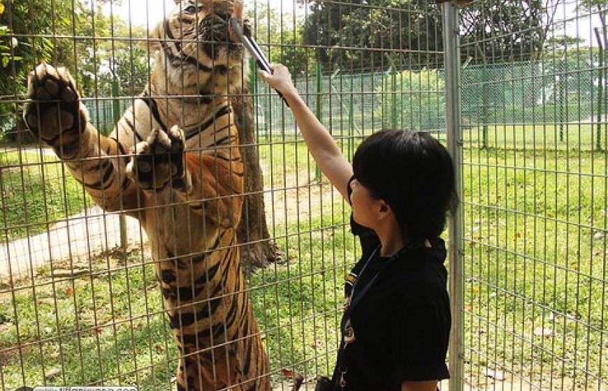 سفاري افاموسا - معلومات ماليزيا - سياحة ماليزيا - اماكن سياحية في ماليزيا